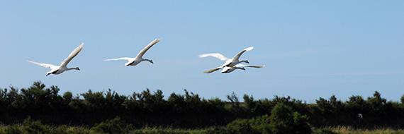 Discover birds / Discover the fauna